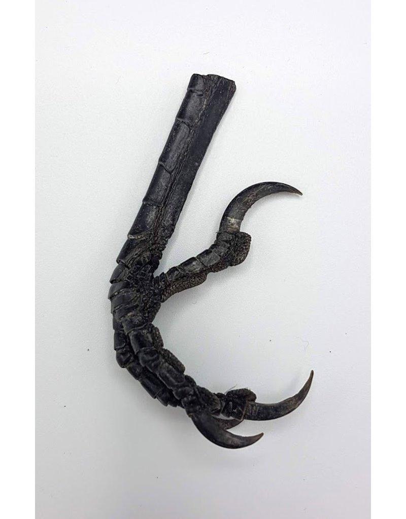 . Crow leg