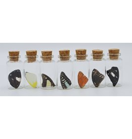 Nature Deco Butterfly wing wish bottle
