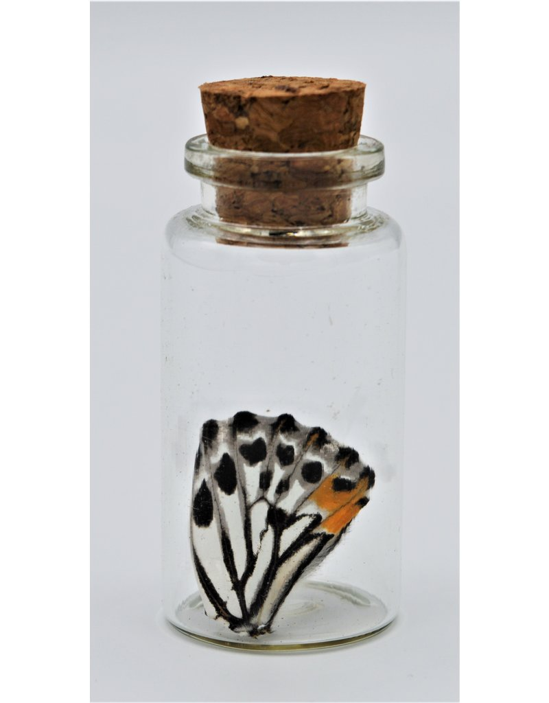 Nature Deco Butterfly wing wish bottle random