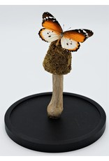 .  Moss mushroom on a stick