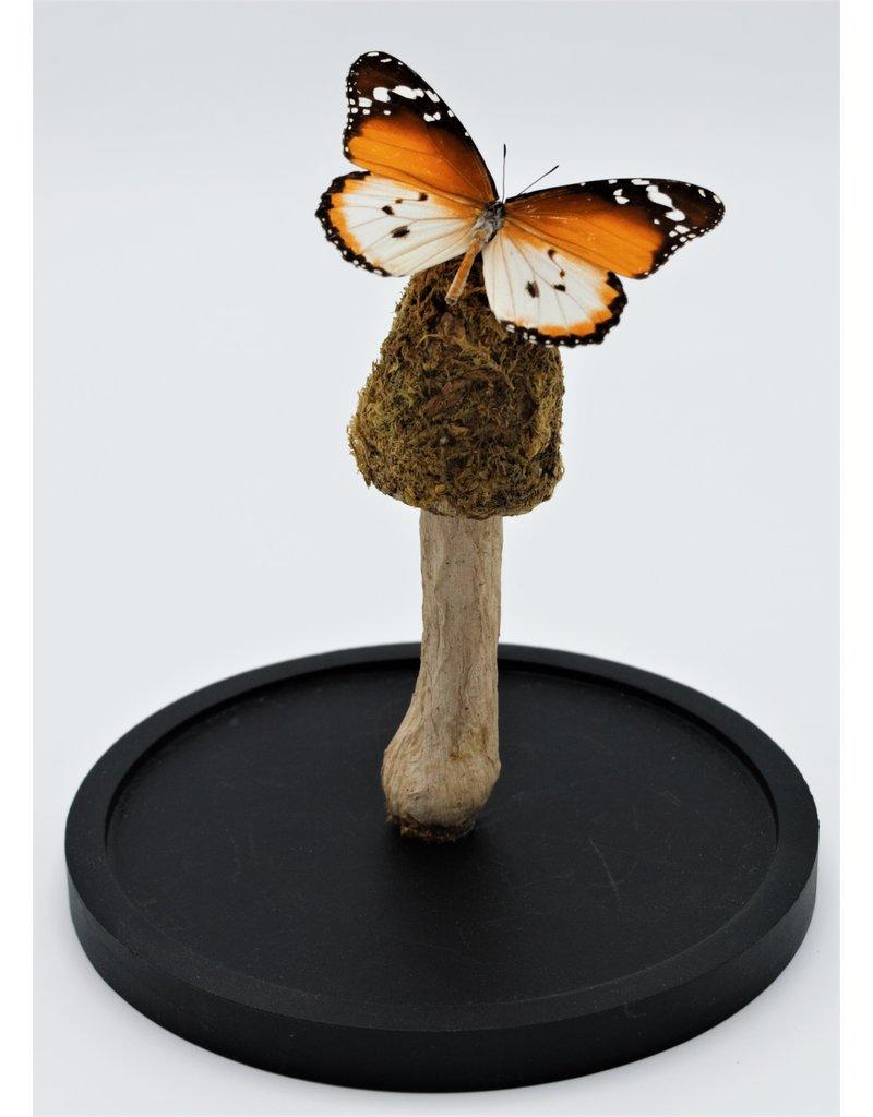 . Mos paddenstoel op een stokje