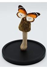 . Moss mushroom trio on a stick