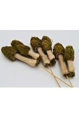 . Mos paddenstoelen trio op een stokje