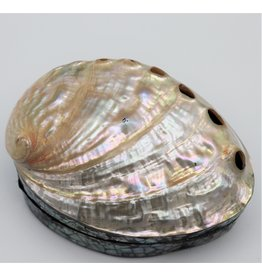 . Shellbox Abalone