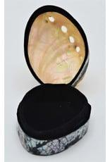 . Shellbox Abalone