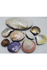 . Shellbox pearl/yellow