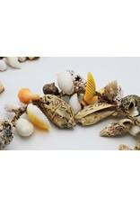 . Shells cord