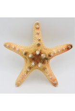 . Starfish luxury