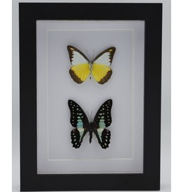 Nature Deco Appias Lyncida and Graphium Doson in luxury 3D frame