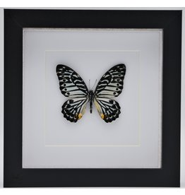 Nature Deco Graphium Delessertii  upside in luxury 3D frame