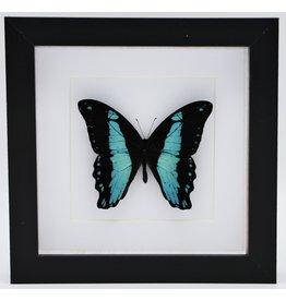Nature Deco Papilio Bromius in luxury 3D frame