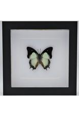 Nature Deco Polyura Moori in luxury 3D frame 17 x 17cm