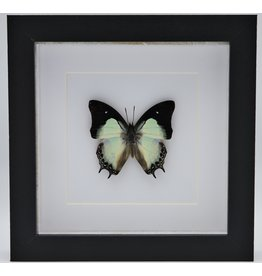 Nature Deco Polyura Moori in luxe 3D lijst