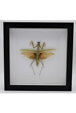 Nature Deco Green grashopper XL in luxury 3D frame 22 x 22cm