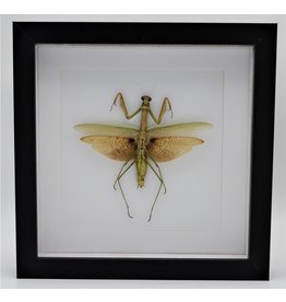 Nature Deco Green grashopper XL in luxury 3D frame