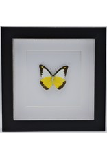 Nature Deco Appia Lyncida in luxury 3D frame 17 x 17cm