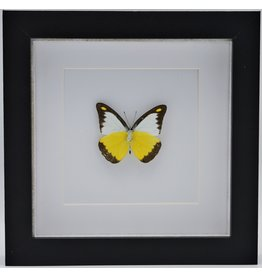 Nature Deco Appia Lyncida in luxury 3D frame
