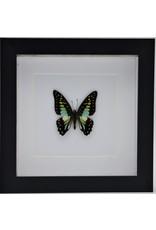 Nature Deco Graphium Doson in luxe 3D lijst 17 x 17cm