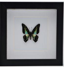Nature Deco Graphium Doson in luxe 3D lijst