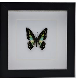 Nature Deco Graphium Doson in luxury 3D frame