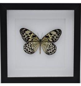 Nature Deco Idea Leuconoe in luxury 3D frame