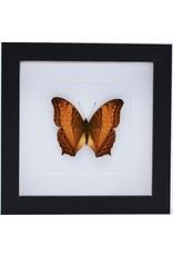 Nature Deco Vindula Dejone in luxury 3D frame 17 x 17cm