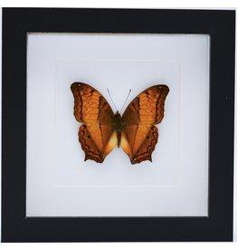 Nature Deco Vindula Dejone in luxe 3D lijst