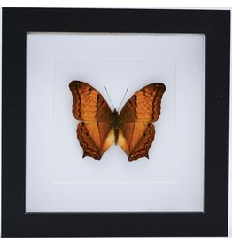 Nature Deco Vindula Dejone in luxury 3D frame