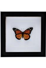 Nature Deco Danaus Plexippus (Monarch vlinder) in luxe 3D lijst 17 x 17cm