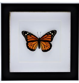 Nature Deco Danaus Plexippus (Monarch buttefly) in luxury 3D frame