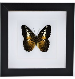 Nature Deco Parthenos Sylvia in luxe 3D lijst