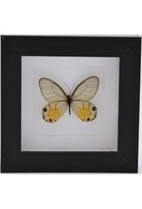 Nature Deco Haetera Piera in luxe 3D lijst 12 x 12cm