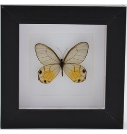 Nature Deco Haetera Piera in luxury 3D frame