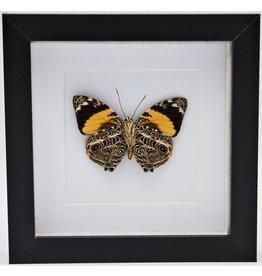 Nature Deco Smyrna Blomfildia in luxury 3D frame