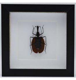 Nature Deco Violin beetle in luxury 3D frame
