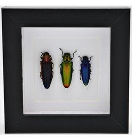 Nature Deco Jewel beetle trio in luxury 3D frame