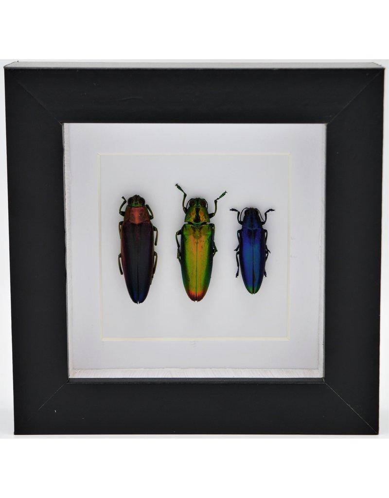Nature Deco Prachtkever trio in luxe 3D lijst 12 x 12cm