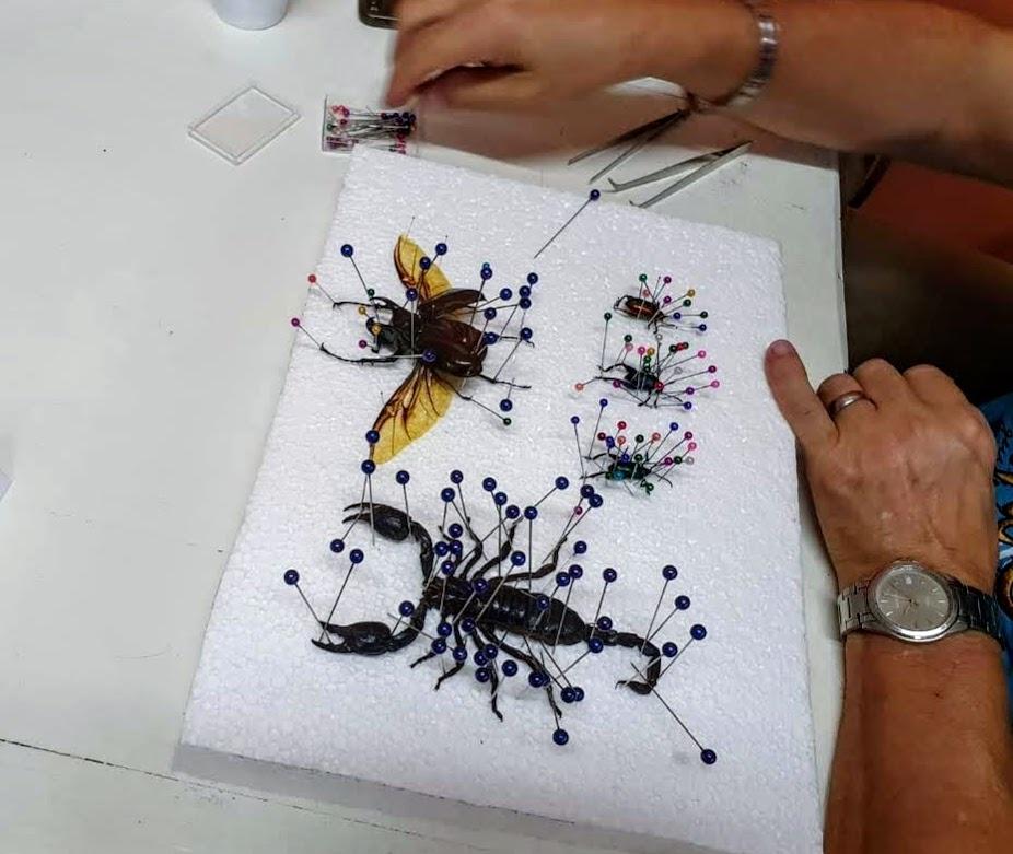 Insecten workshop schorpioen