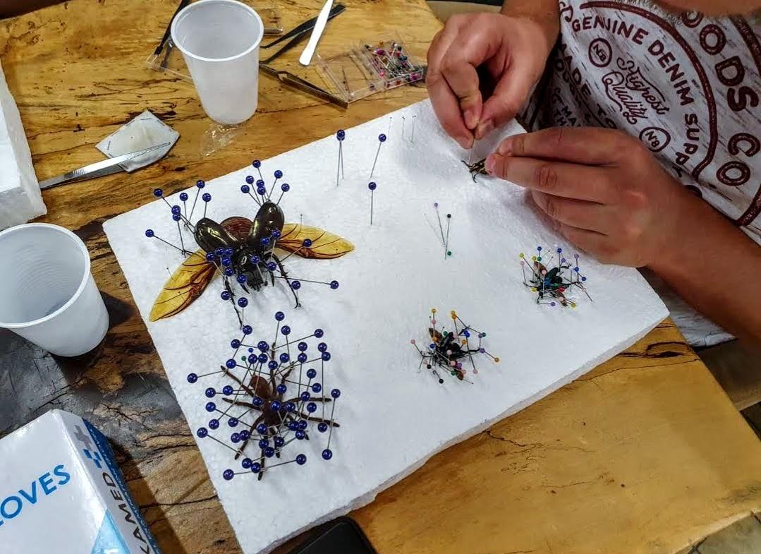 insecten workshop spin