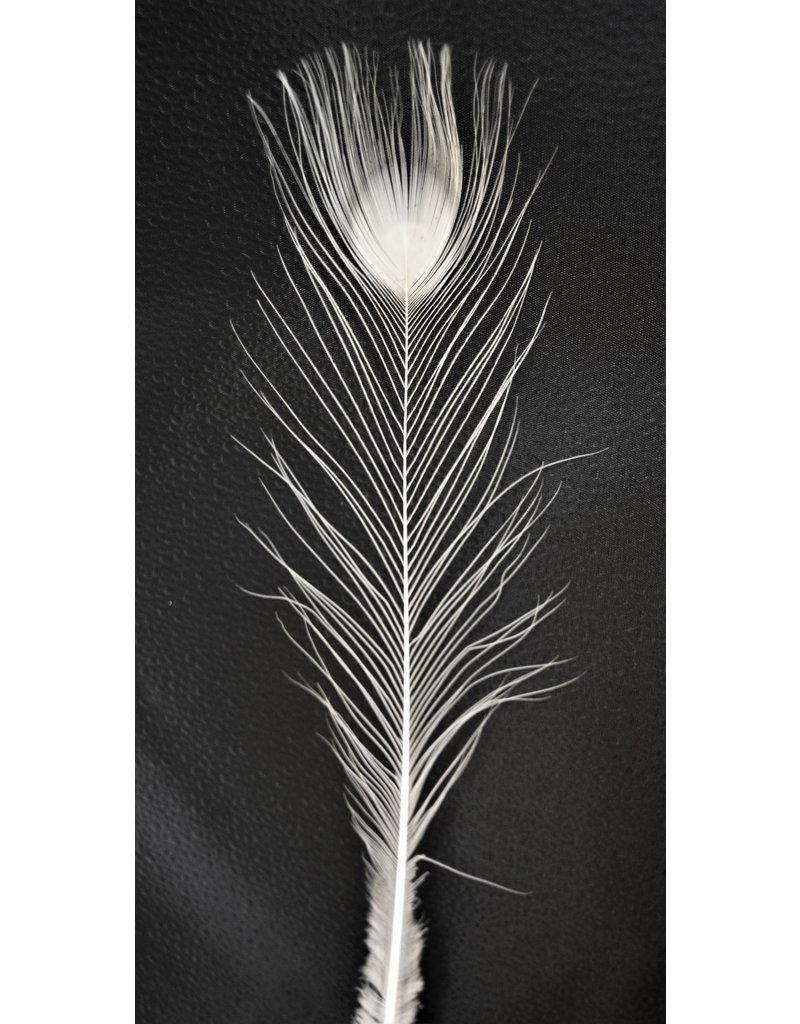 . White peacock feather
