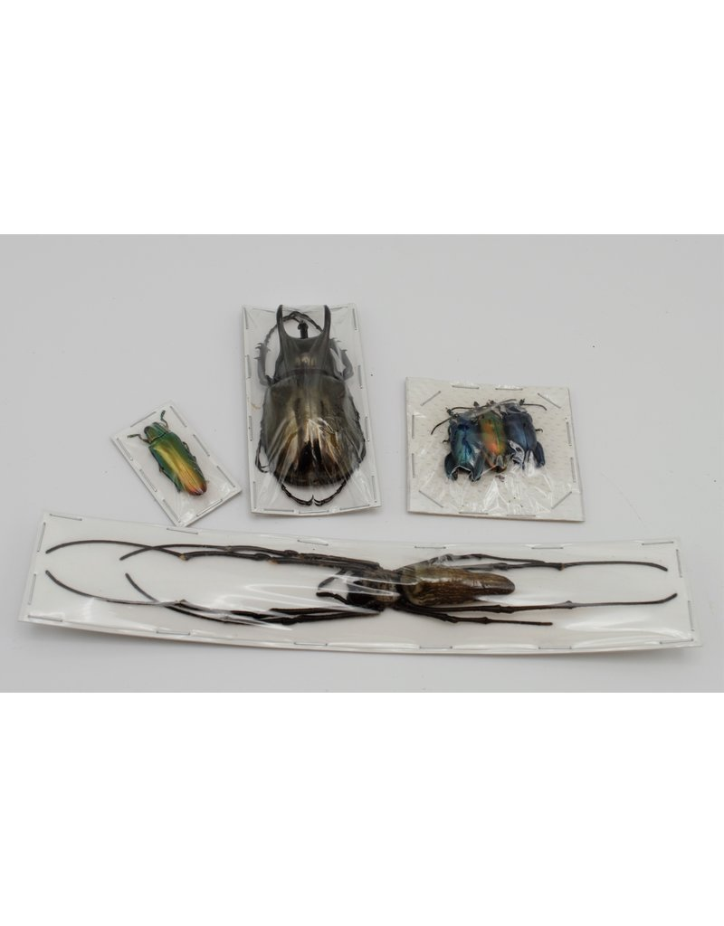 Nature Deco Starter set insect mounting