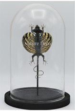 Nature Deco Draco Volans Volans (mounted flying dragon) in glass dome 14 x 21cm