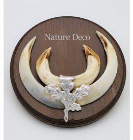 . Tusks wild boar trophy