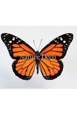 . Ongeprepareerde Danaus Plexippus (Monarch vlinder)