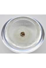 """. Dandelion in resin """"dome"""""""