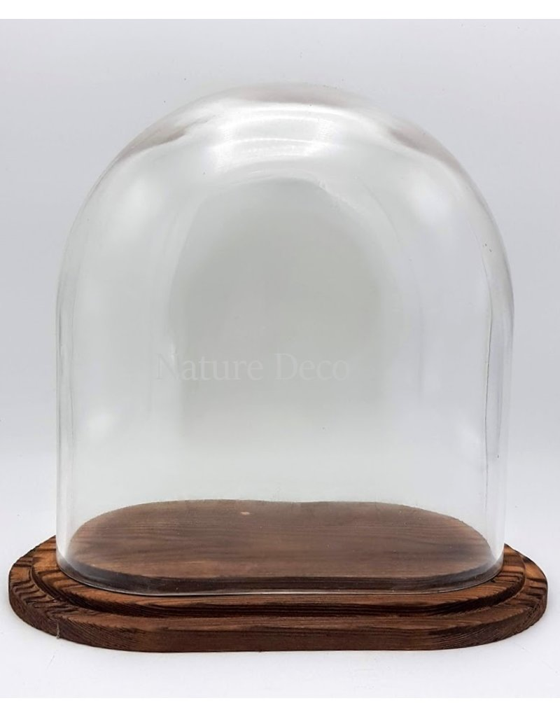 . Glass dome oval small