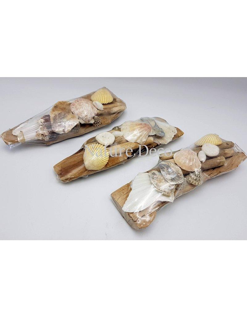 . Shells on wood