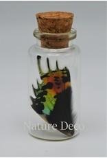 Nature Deco Urania Ripheus onder vleugel wensflesje