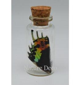 Nature Deco Urania Ripheus bottom wing wish bottle