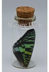 Nature Deco Urania Ripheus upper wing wish bottle
